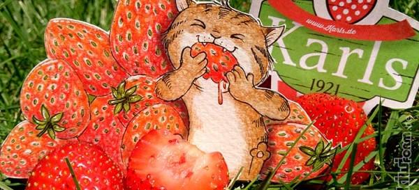 Erdbeeren satt bei Karl's Erdbeerhof in Rövershagen - Daily Illu Tag 28