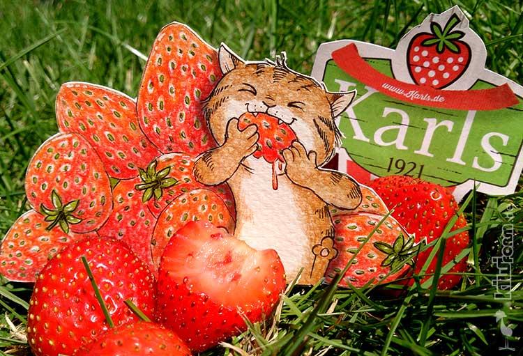 Daily Illu #28 – Erdbeeren satt