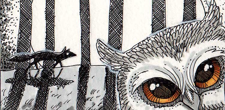 Daily Illu #56 – Wenn sich Fuchs und Eule Gute Nacht sagen